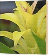 Yellow Cream Tropical Wood Print