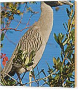 Yellow Crown Night Heron Wood Print