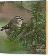 Yellow-crowned Kinglet Wood Print
