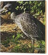 Yellow-crowned Night Heron Eating A Fiddler Crab Dinner Wood Print