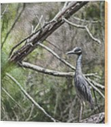 Yellow Crowned Night Heron Wood Print by Frank Feliciano