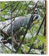 Yellow Crowned Night Heron In Display Wood Print