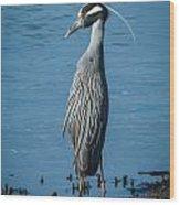 Yellow-crowned Night-heron Wood Print