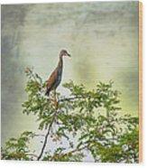 Yellow-crowned Night Heron Swaying In The Wind Wood Print