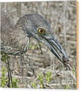 Yellow-crowned Night Heron With Crab Wood Print