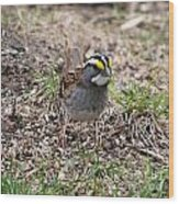 Yellow Crowned Sparrow Wood Print