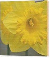 Yellow Daffodil Floral Wood Print