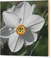 Yellow Daffodil Heart Wood Print