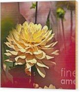 Yellow Dahlia 2 Wood Print