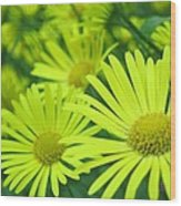 Yellow Daisies Close-up Wood Print