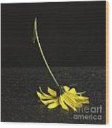 Yellow Daisy Wood Print by Bernard Jaubert