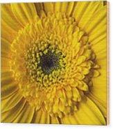 Yellow Daisy Close Up Wood Print