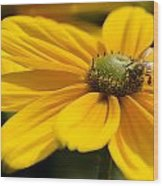 Yellow Daisy Wood Print