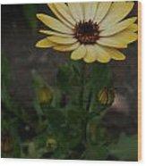 Yellow Daisy Wood Print