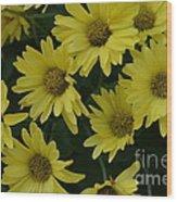 Yellow Daisy Mums Wood Print