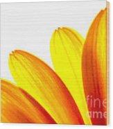 Yellow Daisy Petals Macro Wood Print