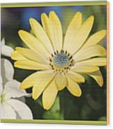 Yellow Daisy With Boarder Wood Print
