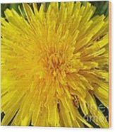 Yellow Dandelion With A Little Heart Wood Print