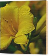 One Day Lily  Wood Print