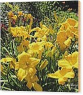 Yellow Daylilies Wood Print