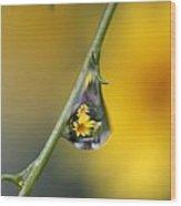 Yellow Dewdrop Wood Print