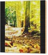 Yellow Discin Day Wood Print