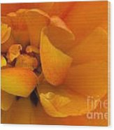 Yellow Double Tulip Wood Print