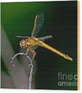 Yellow Dragonfly Wood Print
