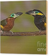 Yellow-eared Toucanet Pair Wood Print