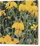 Yellow Echinacea Wood Print