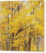 Yellow Fall Wood Print