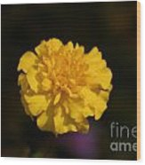 Yellow Fall Flower Wood Print