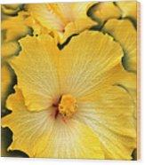 Yellow Fantasy Hibiscus Flowers Wood Print