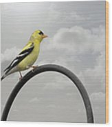 Yellow Finch A Bright Spot Of Color Wood Print by Christine Till