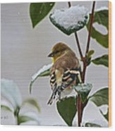 Goldfinch On Branch Wood Print