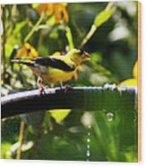 Yellow Finch With A Water Leak Wood Print
