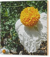 Yellow Flower - 02 Wood Print by Gregory Dyer