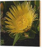 Yellow Flower 1.7103 Wood Print