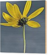 Yellow Flower Against A Stormy Sky Wood Print