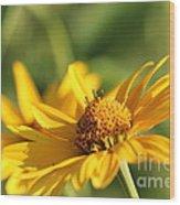 Yellow Flower Wood Print
