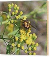 Yellow Flower Bee Wood Print