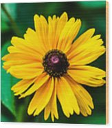 Yellow Flower - Featured 3 Wood Print