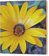 Yellow Flower Helianthus Wood Print