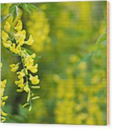 Yellow Flower In The Tree Wood Print
