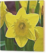 Yellow Flower Iris Wood Print