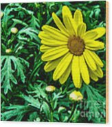 Yellow Flower Of Spring Wood Print