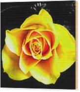 Yellow Flower On A Dark Background Wood Print