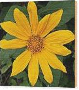 Yellow Flower Petals Wood Print
