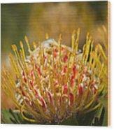 Pincushion Protea Veld Fire  Wood Print