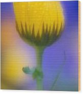 Yellow Flower With Dew Drops Wood Print